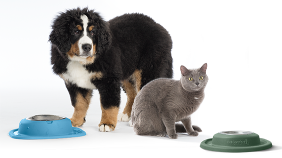 Dog and Cat with PetComfort Bowls