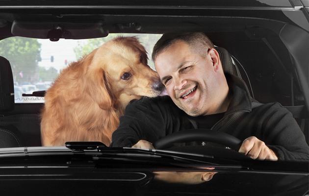 Golden Retriever licking a man's ear as he drives.