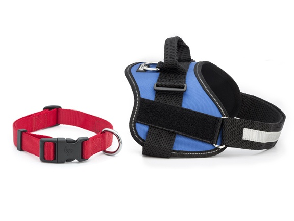Pet_Collars_and_Harnesses_Article3