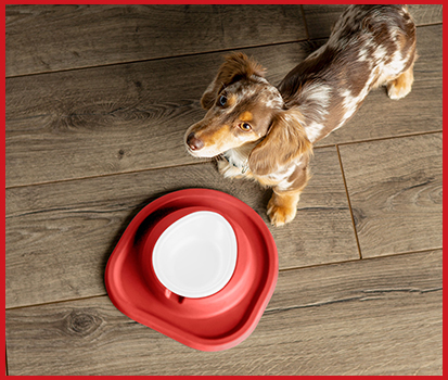 Photograph of a dog waiting for dog food to be placed in a single pet single feeding system.