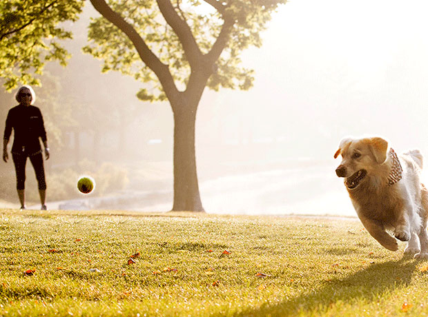 Photo of a woman throwing a tennis ball to a golden retriever in a park