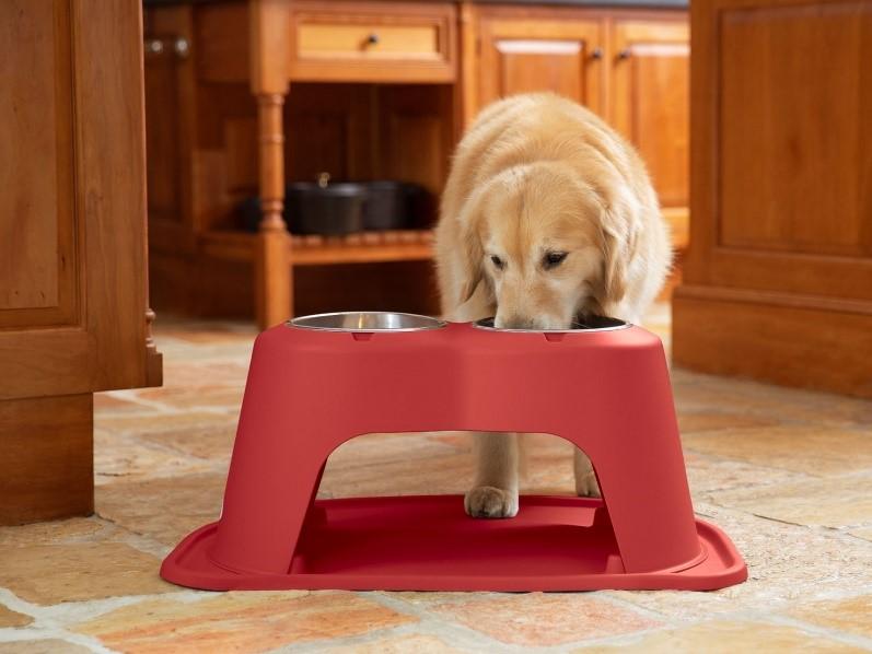 Dog-with-weathertech-pet bowl
