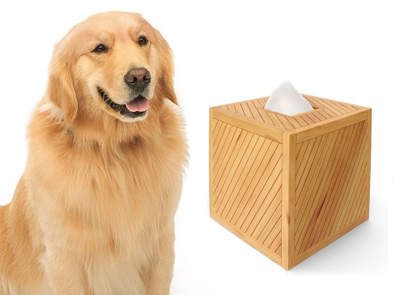 Scout_with_box_of_tissues
