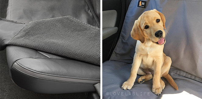 Dog with a Seat_Protector