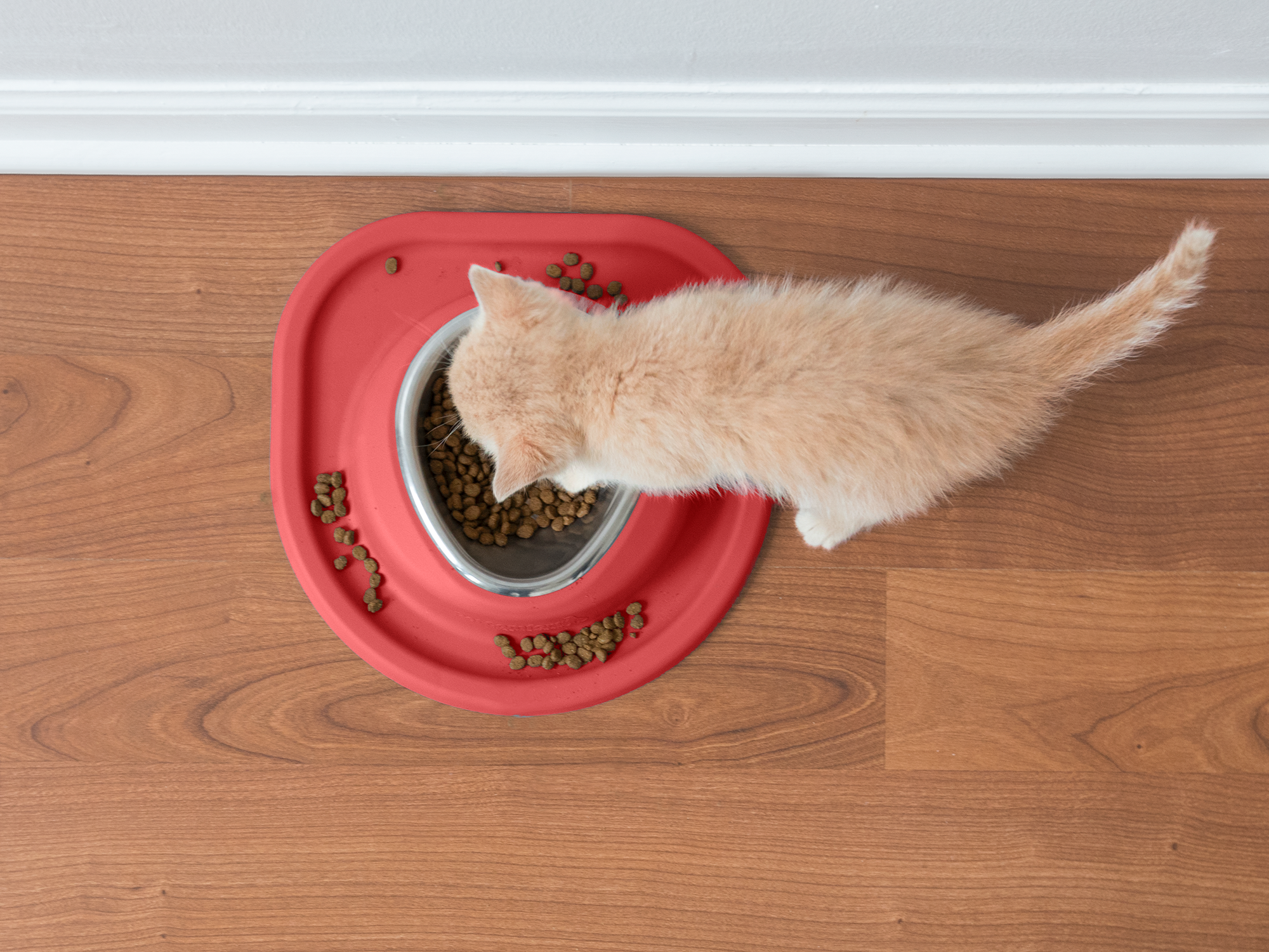 Tabby_kitten_Eating_singlebowl_red_