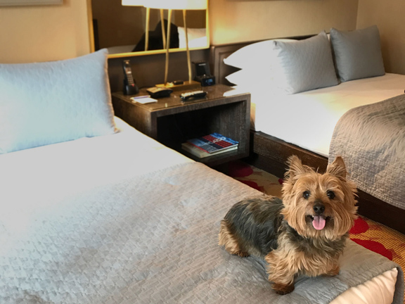 Traveling_with_Dogs_Staying_in_a_Hotel_article