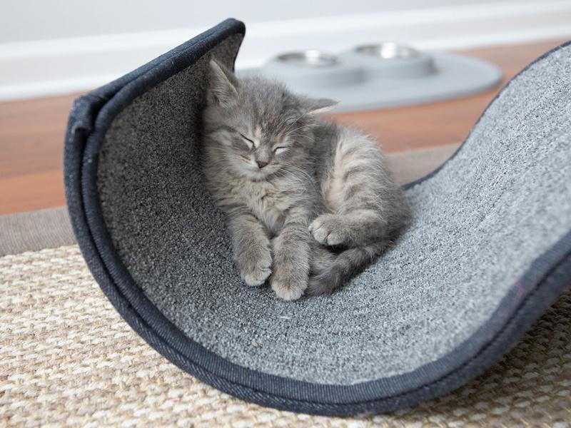 Why_Do_Cats_Sleep_So_Much