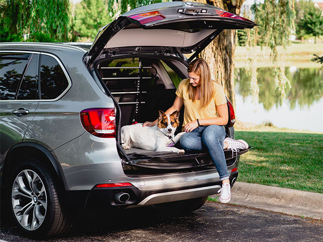 Car Safety for Pets: Top 5 Pet-Friendly Products