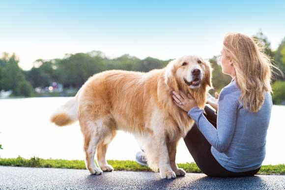 canine_osteoarthritis_a_011618