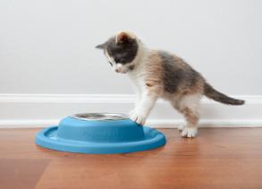 Cat having food in low feeding system