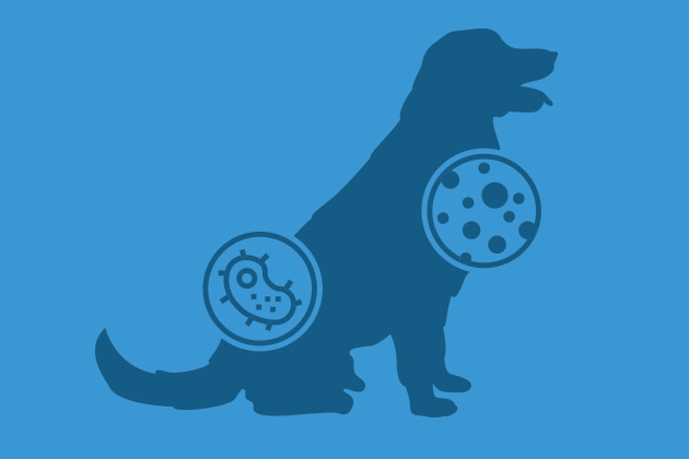 Illustrated silhouette of a dog with two circles giving an illustrated view of different bacteria.