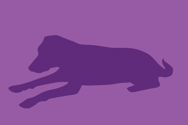 Illustrated purple silhouette of older dog.