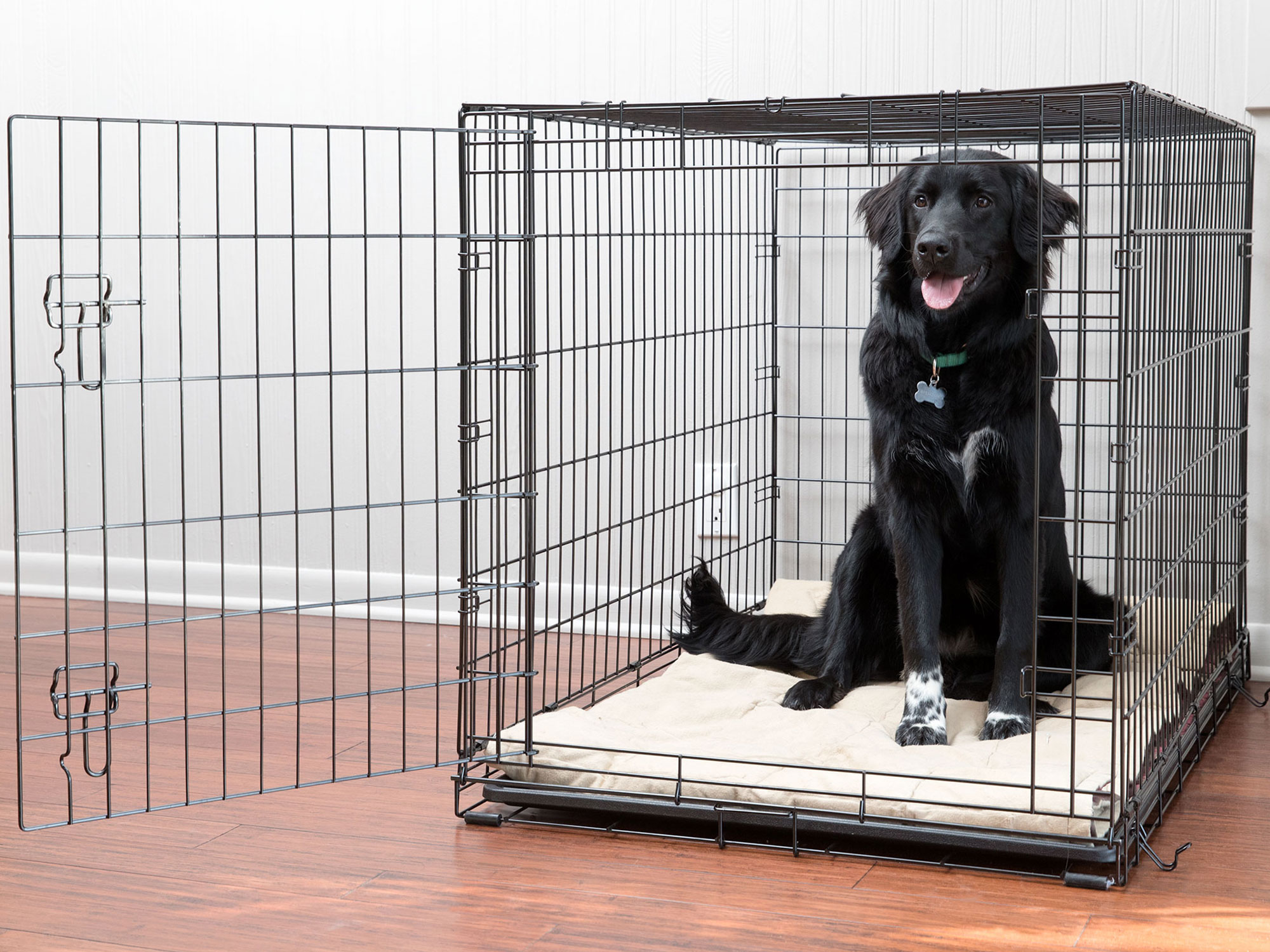 crate_training_dog