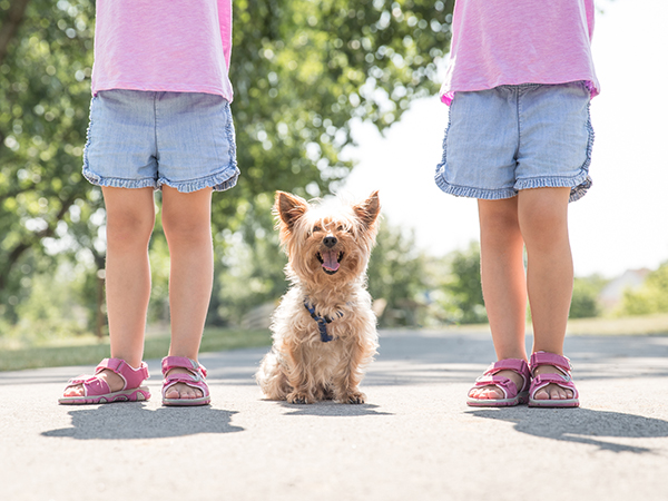 Yorkshire terrier playing outside with two small children.