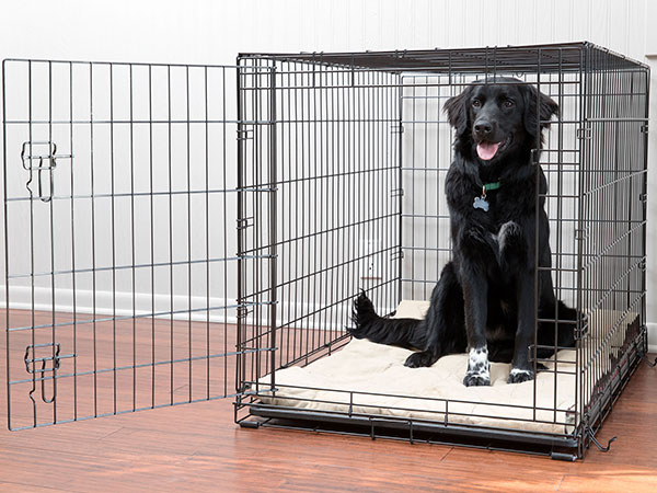 Dog in crate.