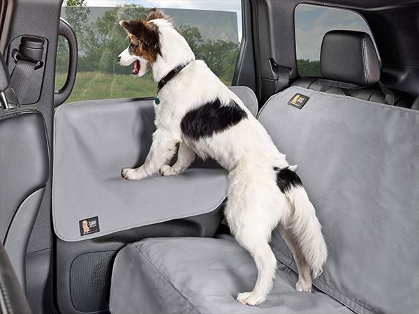 Dog standing on door panel looking on the vehicle's window