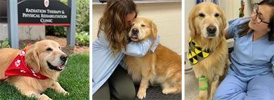 Golden Retriever with veterinarians at School of Veterinary Medicine University of Wisconsin-Madison.