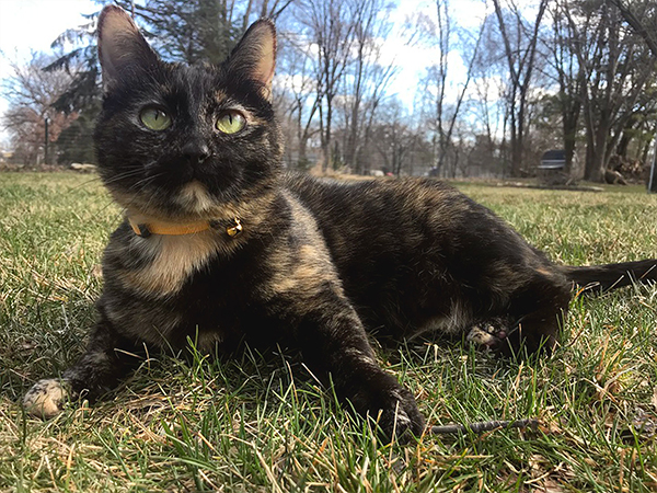 Outdoor cat sitting in the grass