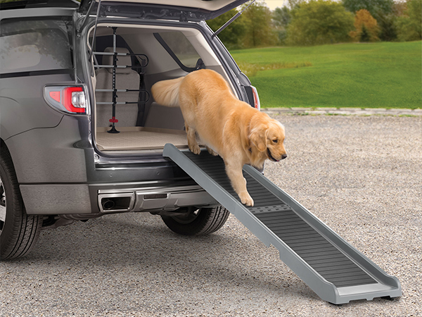 Dog walking down a pet ramp out of an SUV