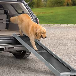 Dog getting down from a car on Pet Ramp