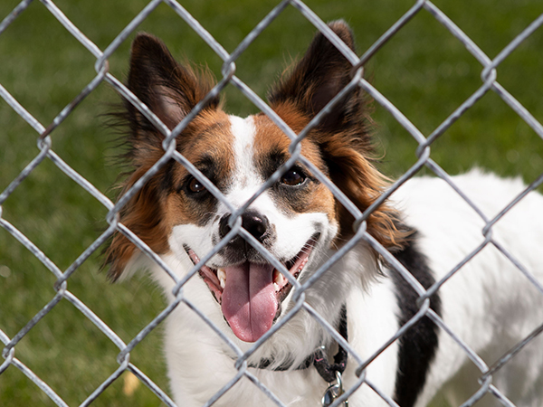 Dog looking through chain fence