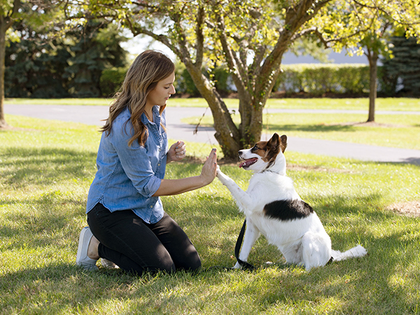 Dog giving owner a high-five